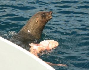 seal dinner