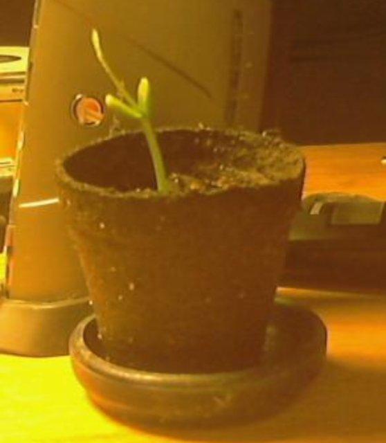 plant04