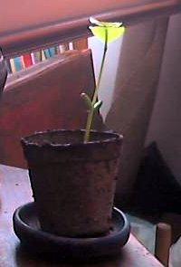 plant09