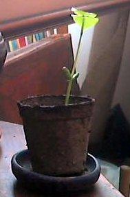 plant09a