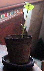 plant10